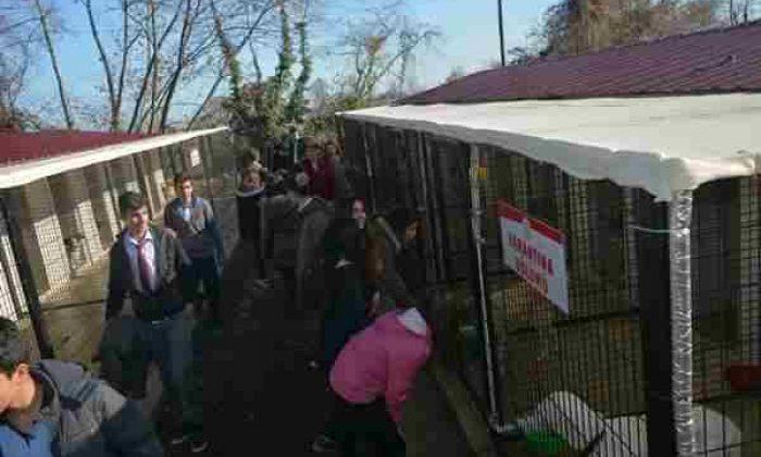Öğrenciler Gerze Hayvan Barınağını Ziyaret Etti