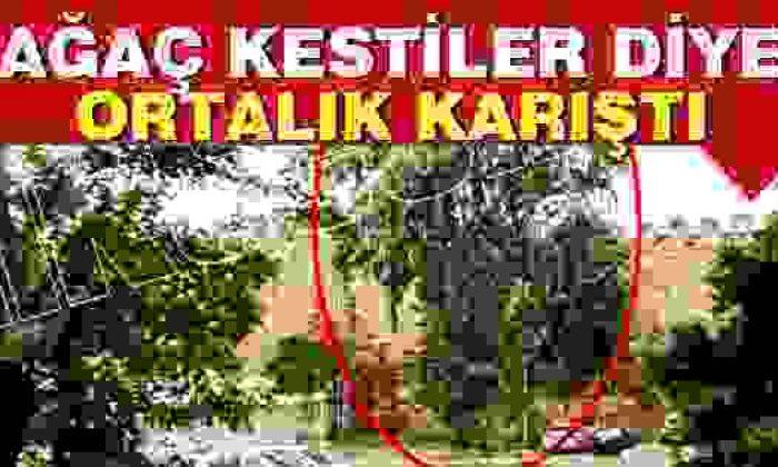 Sinop'ta Ağaç Kesimine Büyük Tepki