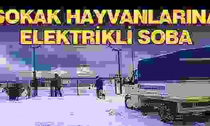 Sinop'ta Sokak Köpeklerine Elektrikli Soba