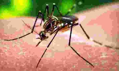 Zika virüsü sonunda çözüldü