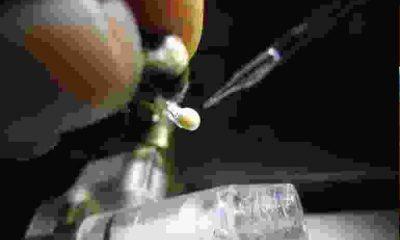 Farelerden kök hücreyle Sperm Üretildi