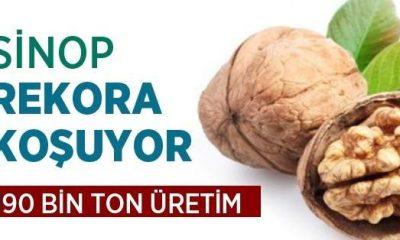Sinop'ta 190 Bin Ton Ceviz Üretildi