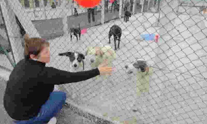 Sokak hayvanlarına yapılan yardım göz dolduruyor