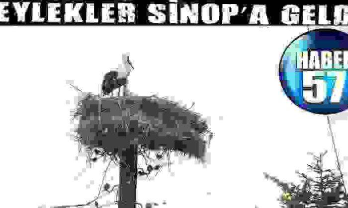 Leylekler Sinop'A Geldi