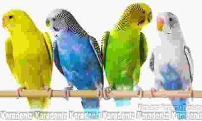 Kuş besliyorsanız akciğerlerinize dikkat!