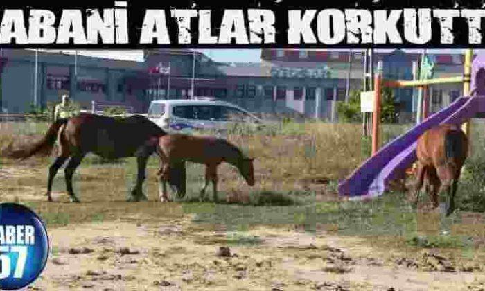 Yabani Atlar Korkuttu