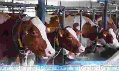 Hayvancılık sektörüne müjde!