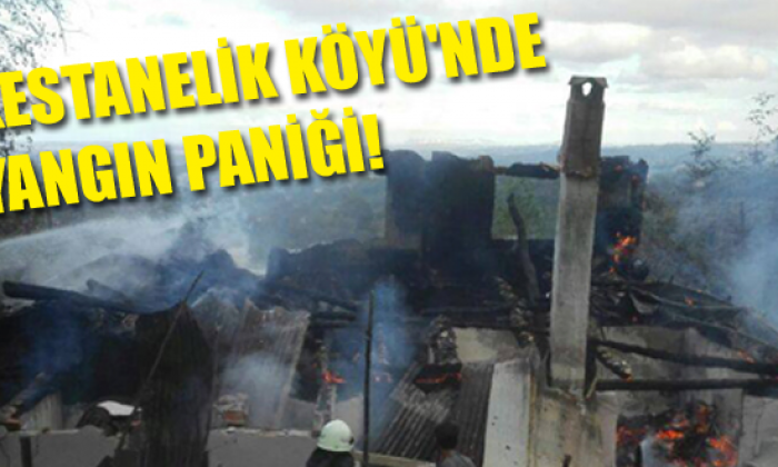 Kestanelik Köyü'nde Yangın Paniği