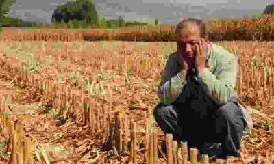 19 Tona Yakın Mısırını Çaldıran Çiftçinin Mutlu Günü