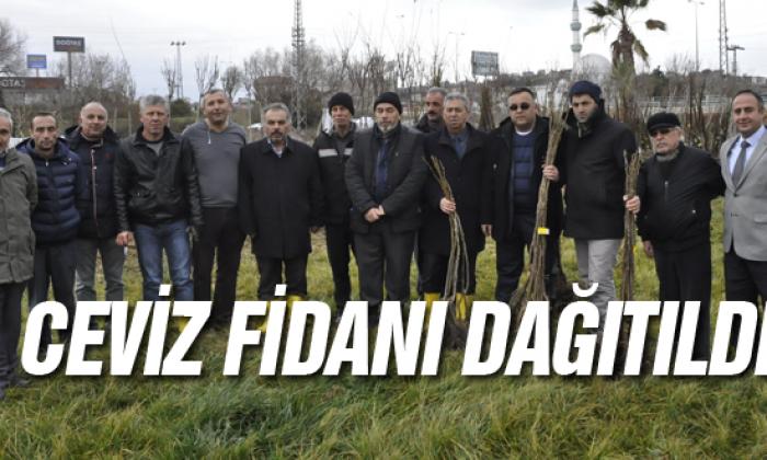 Sinoplu Çiftçilerimize 10.000 Adet Ceviz Fidanı Dağıtıldı