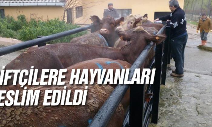 Çiftçilere hayvanları teslim edildi