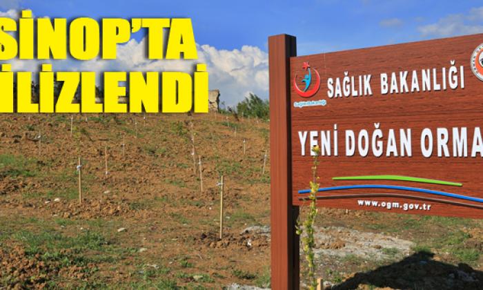"""""""Yeni Doğan Ormanı"""" Sinop'ta filizlendi"""