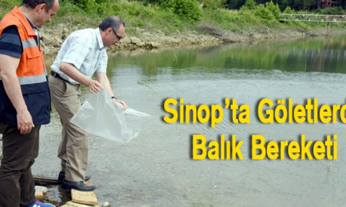 Sinop Ta Göletlerde Balık Bereketi