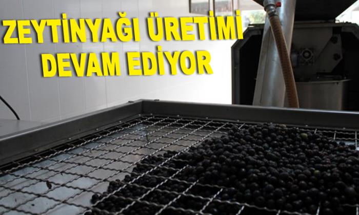 Gerze'de Zeytinyağı Üretimi Devam Ediyor