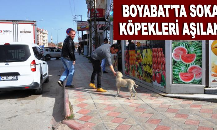Boyabat'ta sokak köpekleri aşılandı