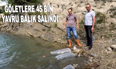 Göletlere 45 bin yavru balık