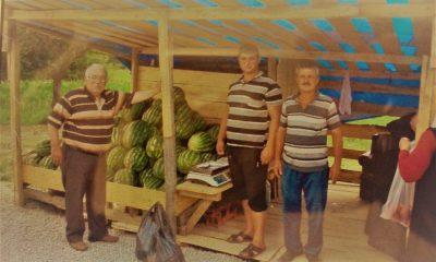 Sinop'un ilk yerli karpuzları çıktı