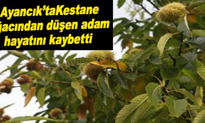 Kestane Ağacından düşen adam hayatını kaybetti