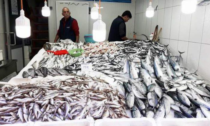 Balıkçı tezgahları doldu taştı