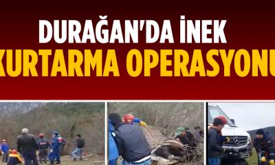 Durağan'da inek kurtarma operasyonu
