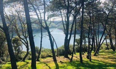 Milli Parklardan 'Hamsilos' açıklaması