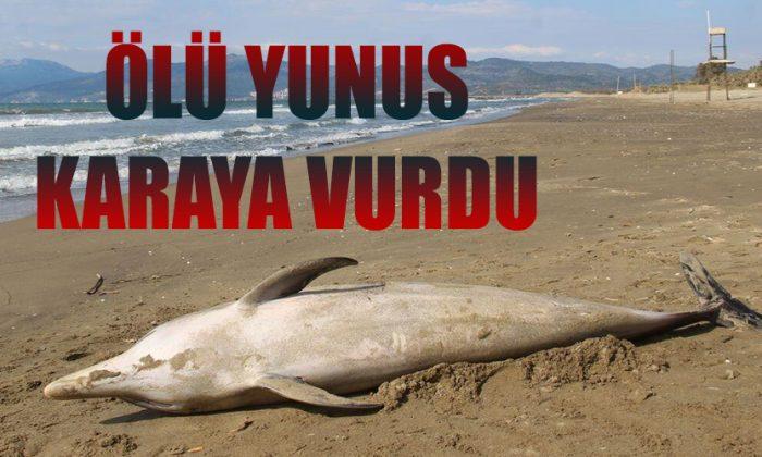 Sinop'ta yunus karaya vurdu