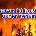 SİNOP'UN İKİ İLÇESİNDE ORMAN YANGINI