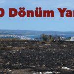 Sinop Adasında 100 Dönümlük Alan Yandı