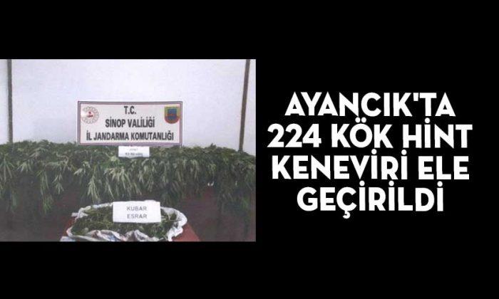 AYANCIK'TA 224 KÖK HİNT KENEVİRİ ELE GEÇİRİLDİ