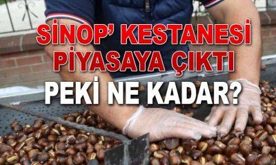 Sinop' kestanesi piyasaya çıktı