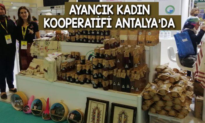 Ayancık Kadın Kooperatifi Antalya'da
